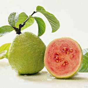 Juicy Guava e-Liquid Vape