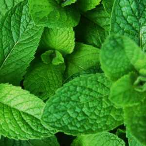Cool Peppermint e-Liquid Vaping ejuice